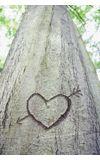 Image de couverture de Béguin des bois