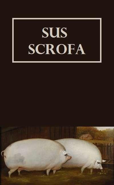 Image de couverture de Sus scrofa