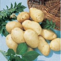 First Early Seed Potatoes Arran Pilot