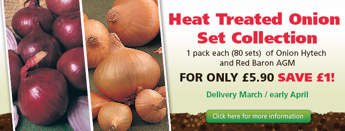 Heat Treated Onion Sets
