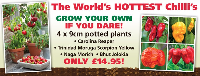 The Worlds Hottest Chilli Plant Collection