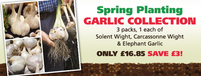 Spring Planting Garlic Collection