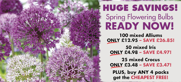 Hurry Our End of Season Bulb Sale Ends Soon!