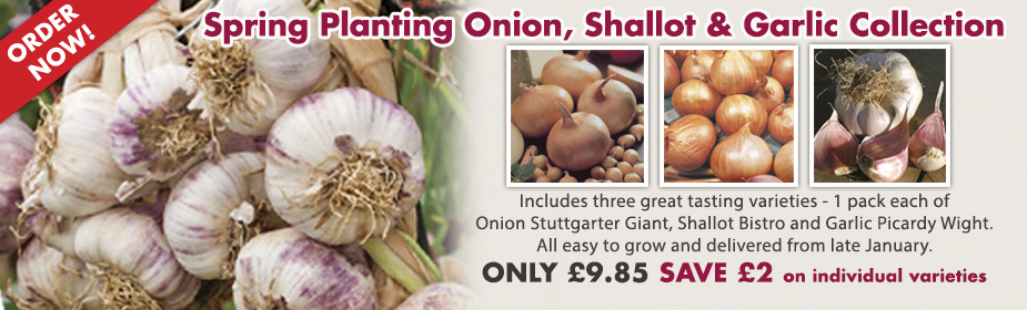 Onion, Shallot and Garlic Collection - Despatching end January!