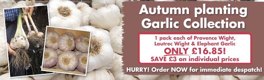 Autumn planting Garlic Collection ONLY £16.85 - order now for immediate despatch!