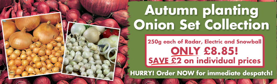 Autumn planting Onion Set Collection ONLY £8.85 - order now for immediate despatch!
