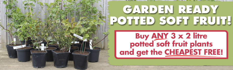 Garden Ready Potted Soft Fruit - Buy ANY 3 get the CHEAPEST FREE!