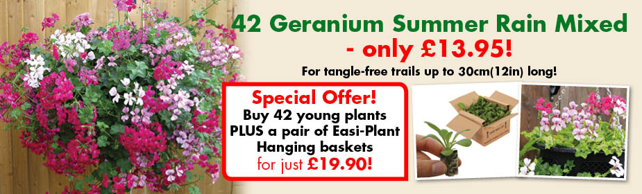 Geranium Summer Rain ONLY £13.95!