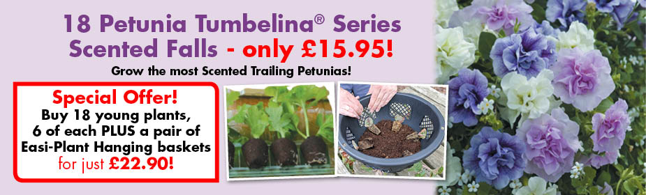 Petunia Tumbelina Series Scented Falls ONLY £15.95!