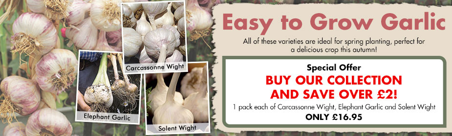 Easy To Grow Garlic