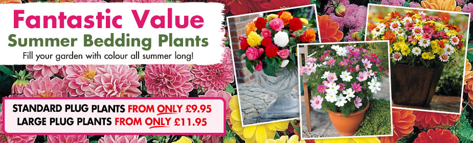 Fantastic Value Summer Bedding Plants from ONLY £9.95!