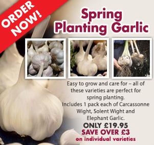 Spring Planting Garlic - Order Now!