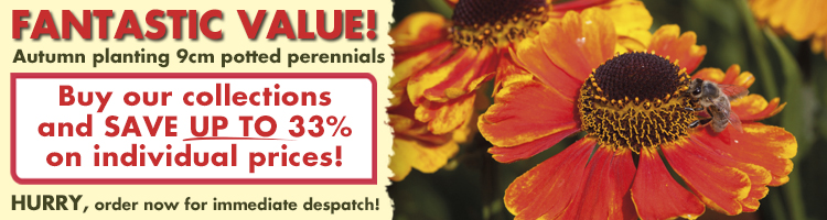Buy our perennial collections and SAVE UP TO 33% on individual prices!
