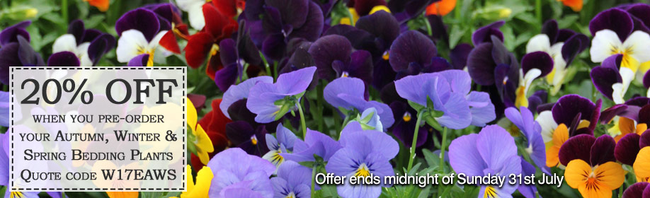 Autumn, Winter and Spring Bedding Plants