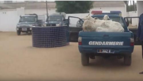 Vidéo: la gendarmerie de Louga fait exploser un réseau de 19 voleurs de bétail