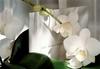 Carte_joel_robuchon_orchidee-jpg