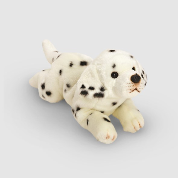 Dashing Dalmatian Puppy