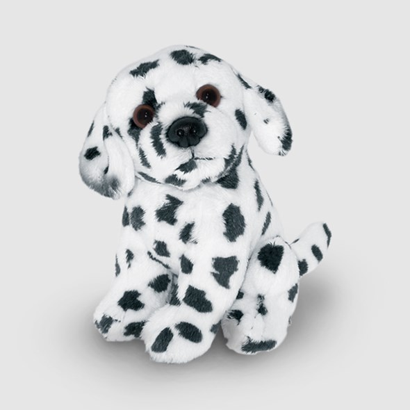 Darling Dalmatian Puppy