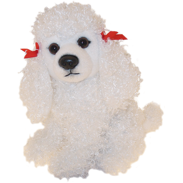 White Poodle Puppy