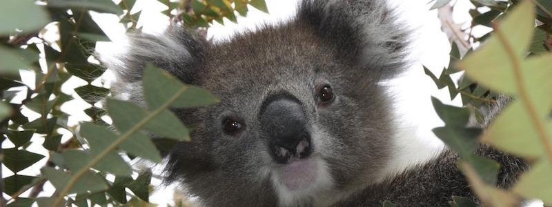Reasons to Move to Australia