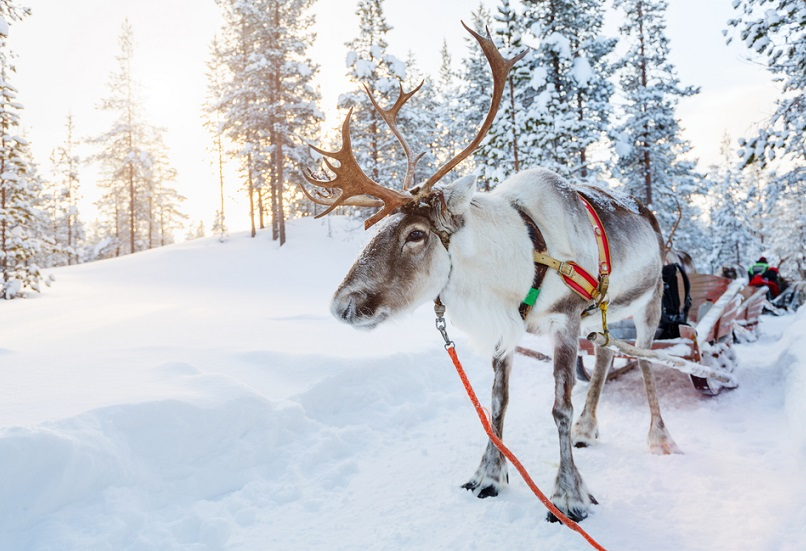 Christmas destinations: Lapland