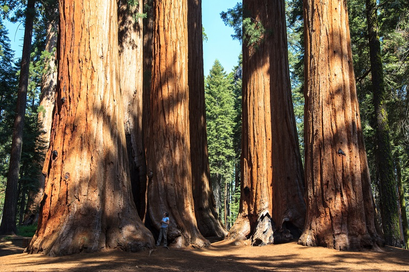 Best National Parks in USA: Redwood