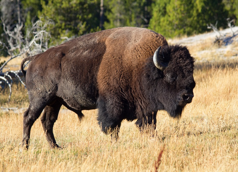 Best National Parks in USA: Yellowstone