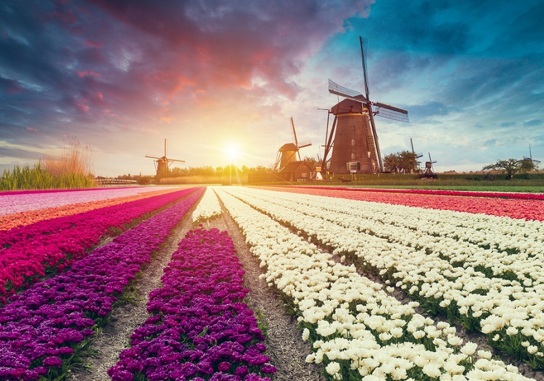 English language courses in the Netherlands