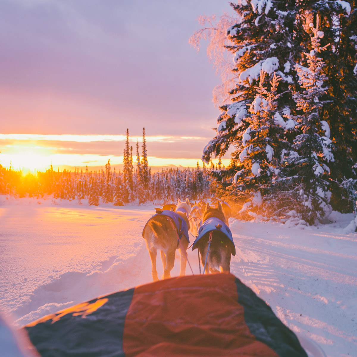 Bucket List Travel 2021 - Lapland