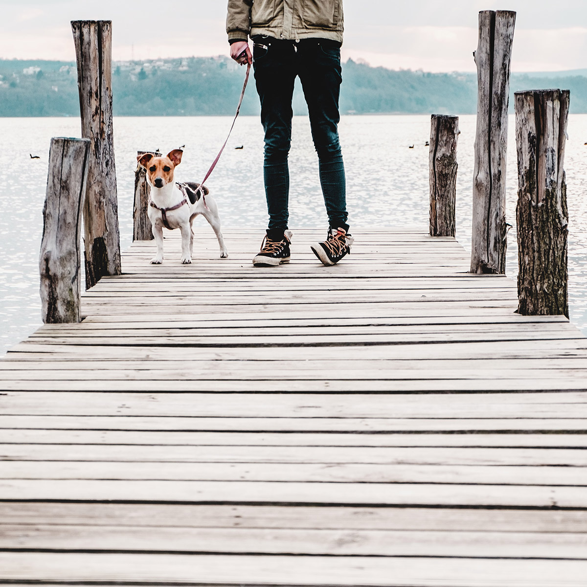 Travel to EU after Brexit - Pet Travel