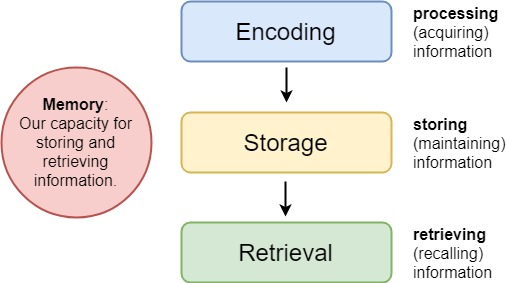 Seneca Learning -  three stages of memory processing