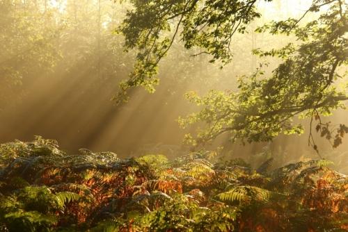 ForestOfDean9713