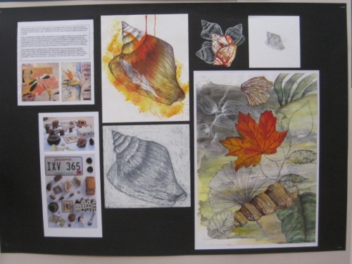 Y12 Collections Natural Form Studies