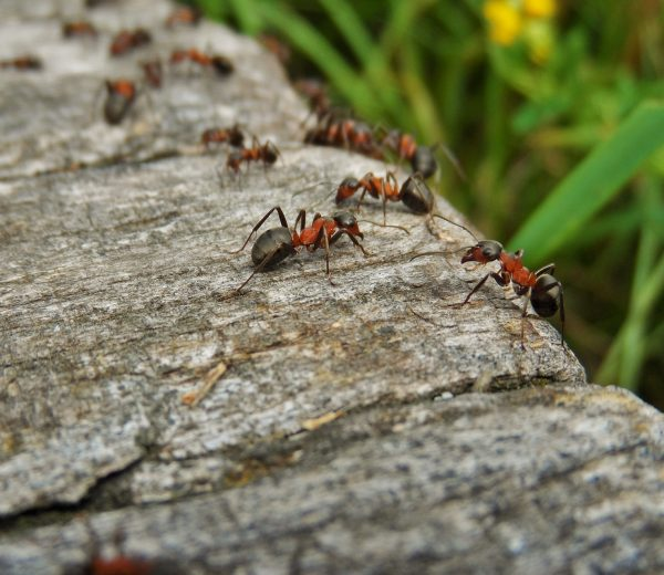 8 Natural Ways to Keep Insects Out of Your Home This Summer