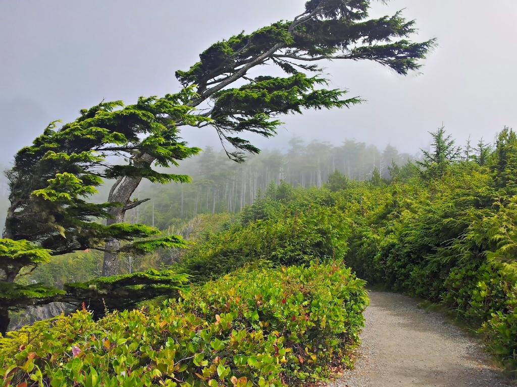 Mlha na cestě