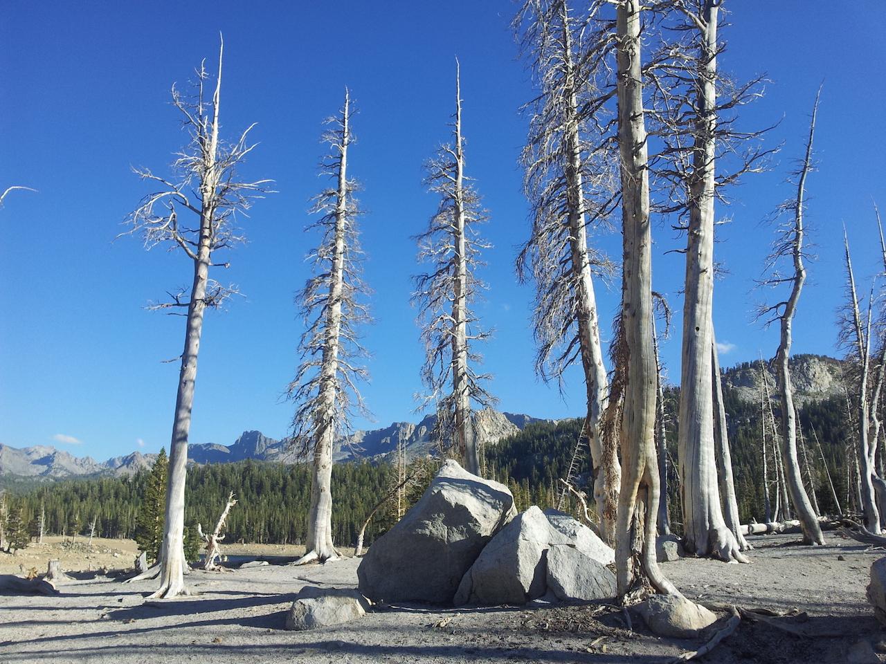 Stromy otrávené CO2