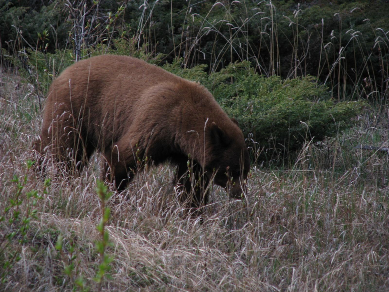 První medvídek