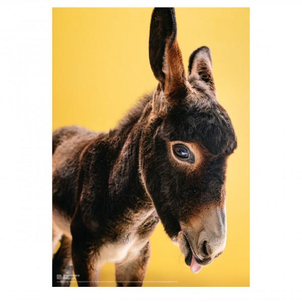 """Poster """"So ein Esel"""" (Jaro)"""