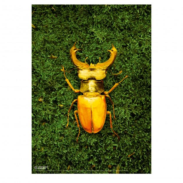 "Poster ""Artenvielfalt"" grün"