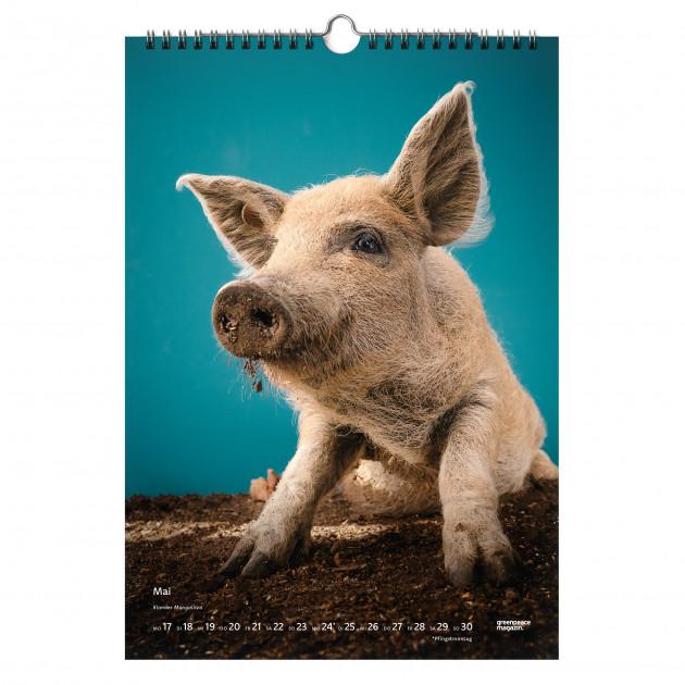Kalender 2021 Saugut