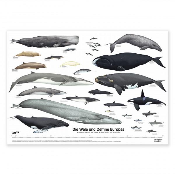 """XXL Poster """"Wale und Delfine Europas"""""""