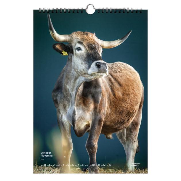 """Kalender 2022 """"Stolze Rinder"""""""