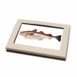Vorschau: Postkarten-Set Fische