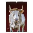 """Vorschau: Kalender 2022 """"Stolze Rinder"""""""
