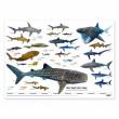 """Vorschau: XXL Poster """"Welt der Haie"""""""