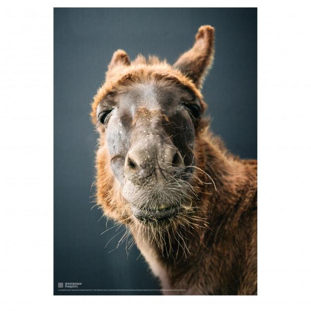"Poster ""So ein Esel"" (Que Cera)"