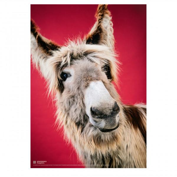 """Poster """"So ein Esel"""" (Ilex von der Schlei)"""