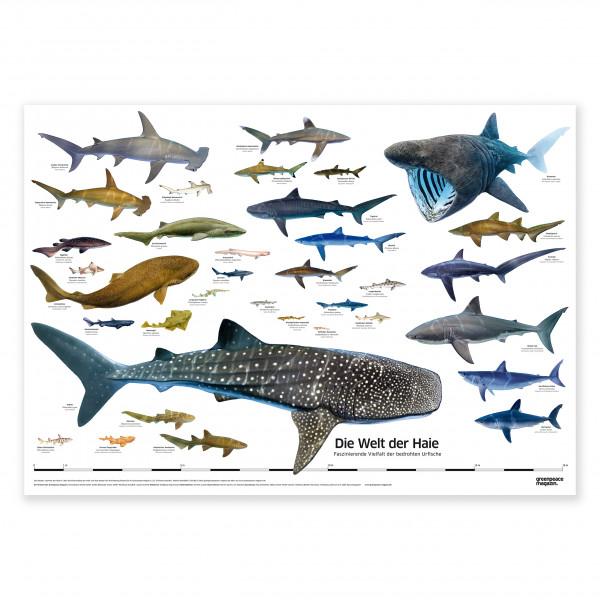 """XXL Poster """"Welt der Haie"""""""
