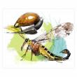 """Vorschau: Klappkarten-Set """"Magische Insektenwelt"""""""