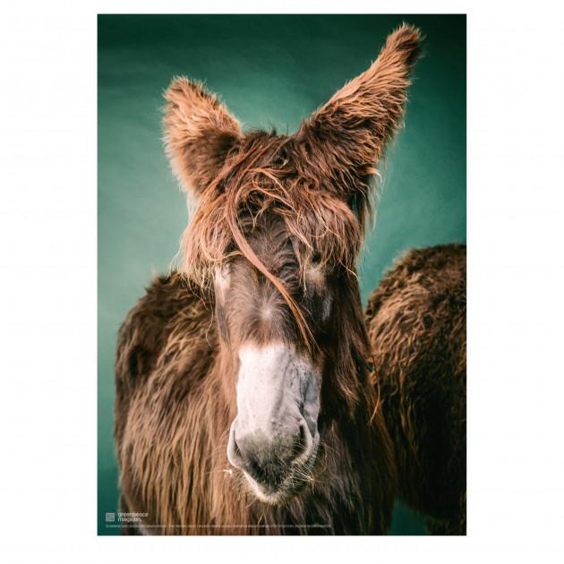 """Poster """"So ein Esel"""" (Alli)"""
